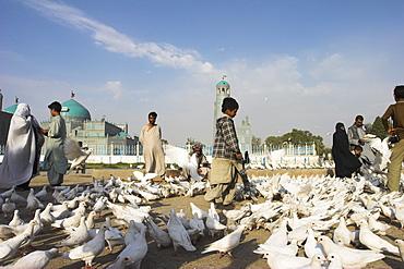 Street boy walks amongst the famous white pigeons, Shrine of Hazrat Ali, Mazar-I-Sharif, Afghanistan, Asia