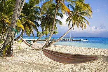 Hammocks hanging between palm trees, Kuanidup Grande, Comarca de Kuna Yala, San Blas Islands, Panama, Central America