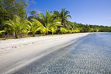 Star Beach, Colon Island (Isla Colon), Bocas del Toro Province, Panama, Central America