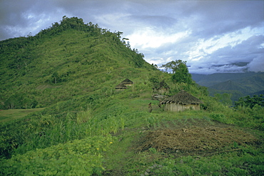 Yali village, Irian Jaya (West Irian) (Irian Barat), New Guinea, Indonesia, Asia