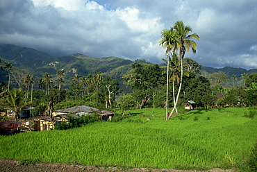 Rice paddies in a rural landscape at Moni, Flores, Indonesia, Southeast Asia, Asia