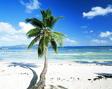 Leaning palm tree and beach, Anse Severe, La Digue island, Seychelles, Indian Ocean, Africa