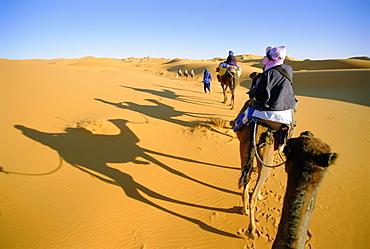 Camel trek in Sahara dunes near Merzouga, Morocco, North Africa