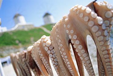 Octopus drying in the sun, Mykonos, Cyclades Islands, Greece, Europe