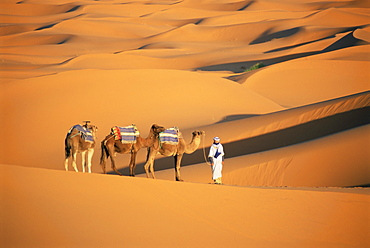 Camel guide and camels, rolling sand dunes of the Erg Chebbi dune sea, Sahara Desert, near Merzouga, Morocco, North Africa, Africa