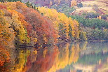Autumn colour on the banks of the River Tummel near Pitlochry, Scotland, United Kingdom, Europe