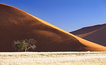 Side view of Dune 45 showing sand blowing in the wind and the sunlit ridge against blue sky, Namib Desert near Sesriem, Namib Naukluft Park, Namibia, Africa