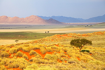 Panoramic view over the desert landscape of the Namib Rand game reserve bathed in evening light, Namib Naukluft Park, Namibia, Africa