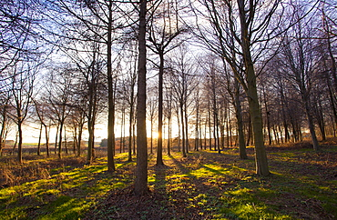 Winter woodland backlit by the late afternoon sun, Longhoughton, near Alnwick, Northumberland, England, United Kingdom, Europe