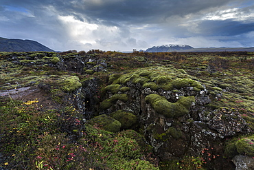 Mossy landscape with fissures, Pingvellir (Thingvellir) National Park, UNESCO World Heritage Site, near Reykjavik, Iceland, Polar Regions