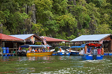 Mangrove safari boats stop for tourists to visit a fish farm and handle horseshoe crabs, Langkawi, Malaysia, Southeast Asia, Asia
