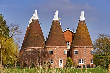 Oast houses, originally used to dry hops in beer-making, converted into farmhouse accommodation at Hadlow, Kent, England, United Kingdom, Europe