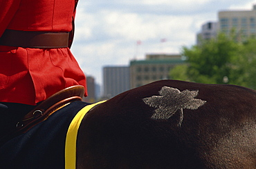 Royal Canadian Mounted Policeman's horse with maple leaf branding, Ottawa, Canada, North America