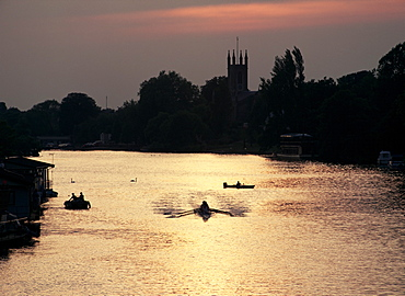 Rowers on River Thames with church tower beyond, Hampton, Greater London, England, United Kingdom, Europe