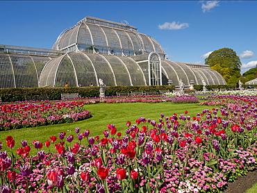 Palm House and tulips, Royal Botanic Gardens, UNESCO World Heritage Site, Kew, Greater London, England, United Kingdom, Europe