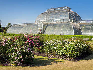 Rose beds and Palm House, Kew Gardens, UNESCO World Heritage Site, Kew, Greater London, England, United Kingdom, Europe