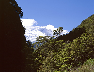 Silver Beech Forest and Rob Roy Glacier, Rob Roy Valley, Mount Aspiring National Park, Westland, South Island, New Zealand, Pacific