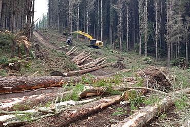 Forestry felling machine, Waikato, North Island, New Zealand, Pacific