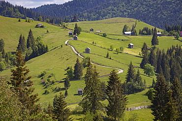 Countryside and farms between Sucevita to Vatra Moldovitei in Carpathian foothills, Bukovina, Romania, Europe