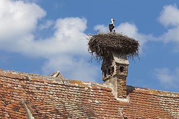 Stork and chicks nest on chimney, Merghindeal Village, Transylvania, Romania, Europe