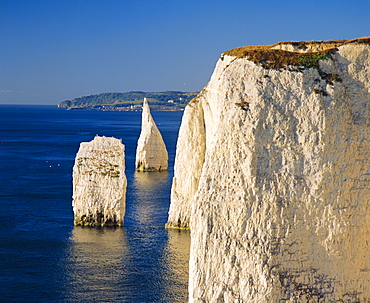 Handfast Point, Clifftop view showing the Pinnacles, early morning, Studland, Dorset, England