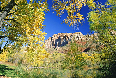 Cliffs of Zion framed by autumn trees, Springdale, near Zion National Park, Utah, USA, North America