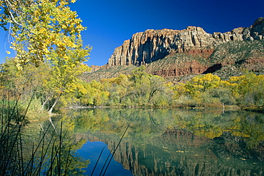 Reflections of trees in fall colours and the cliffs of Zion, in a lake, at Springdale near the Zion National Park, Utah, USA