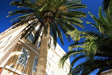 Harbourside palms, Sanary-sur-Mer, Var, Cote d'Azur, Provence, France, Europe