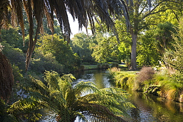 View along the palm-fringed Avon River in Christchurch Botanic Gardens, Christchurch, Canterbury, South Island, New Zealand, Pacific