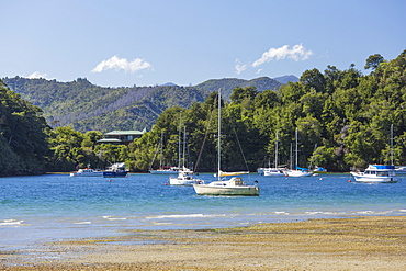 Yachts moored in the sheltered harbour, Ngakuta Bay, near Picton, Marlborough, South Island, New Zealand, Pacific