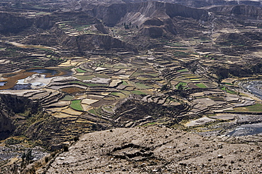 View over valley and Inca terraces near Chivay, Colca Canyon, Peru, South America