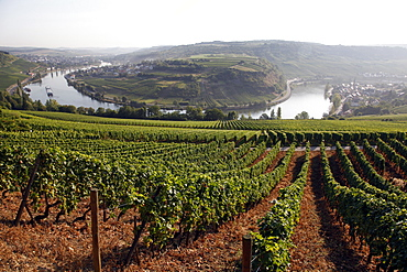 River Mosel and vineyards near Grevenmacher, Mosel Valley, Luxembourg, Europe