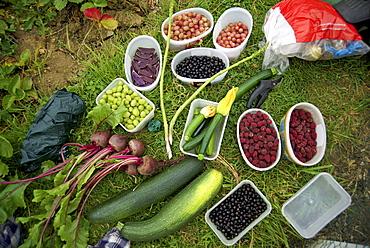 Allotment produce of fruit and vegetables, Cambridgeshire, England, United Kingdom, Europe