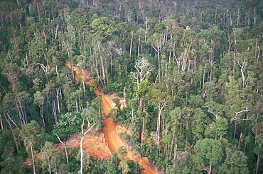 Logging road through rainforest, Brazil, South America