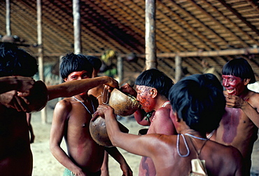 Yanomami drinking plantain soup at feast, Brazil, South America