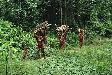 Yanomami indian women collecting wood, Brazil, South America - 42-2364