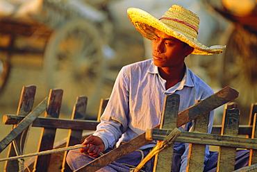 Bullock cart driver, Myanmar, Asia