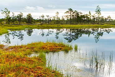Lake in the Kemeri Bog, Jurmala, Latvia, Europe