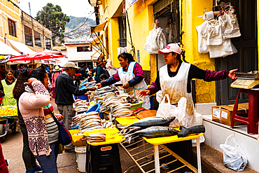 Women fishmongers selling at their shop-fronts near San Pedro Market, Cusco, UNESCO World Heritage Site, Sacred Valley, Peru, South America