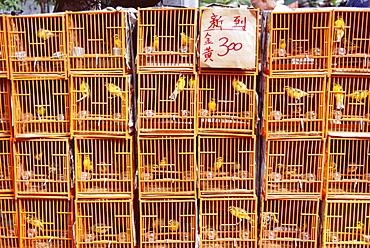 Caged birds for sale, Yuen Po Street, Bird Garden, Mong Kok, Kowloon, Hong Kong, China, Asia
