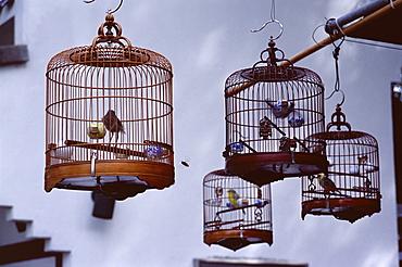 Caged birds for sale, Yuen Po Street Bird Garden, Mong Kok, Kowloon, Hong Kong, China, Asia