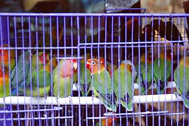 Caged birds, Yuen Po Street Bird Garden, Mong Kok, Kowloon, Hong Kong, China, Asia