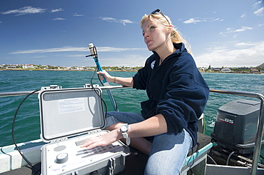 Scientist uses hydrophone to track tagged great white shark (Carcharodon carcharias) behaviour in real time, Gaansbaai, Western Cape, South Africa, Africa
