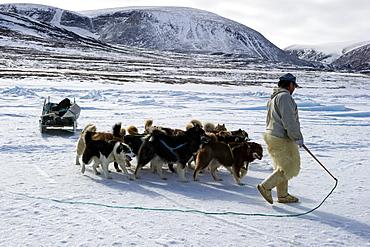 Inuit hunter walking his dog team on the sea ice, Greenland, Denmark, Polar Regions - 465-3398
