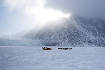 Inuit hunter and his dog team travelling on the sea ice, Greenland, Denmark, Polar Regions - 465-3399