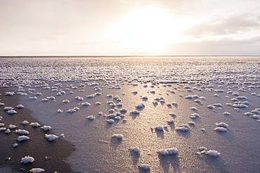 Frost flowers formed on thin sea ice when the atmosphere is much colder than the underlying ice, Greenland, Denmark, Polar Regions