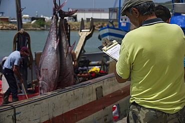 Almadraba fishery of migrating Atlantic Bluefin tuna (Thunnus thynnus) which has a strict quota system for its catch, Andalucia, Spain, Europe - 465-3431