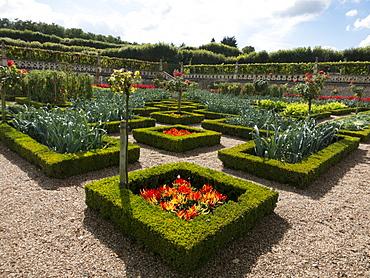 Leeks, chilli peppers in the kitchen gardens that feature seasonal vegetables at the Chateau de Villandry, UNESCO World Heritage Site, Loire Valley near Tours, Indre et Loire, Centre, France, Europe