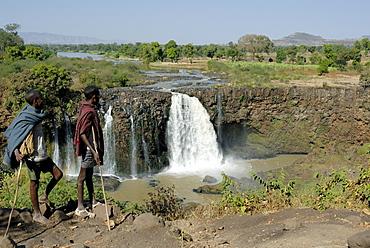 Goat herds, Blue Nile Falls, Ethiopia, Africa