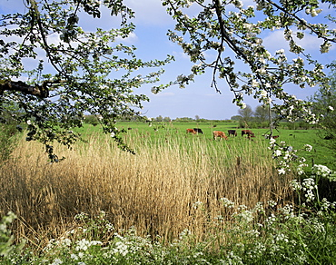 Typical Dutch landscape, Gelderland, Holland, Europe